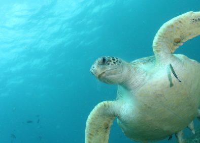 This Amount of Plastic Kills Sea Turtles - Freediving UAE