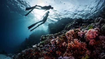 Behaving with marine life. Short memo for beginner freedivers