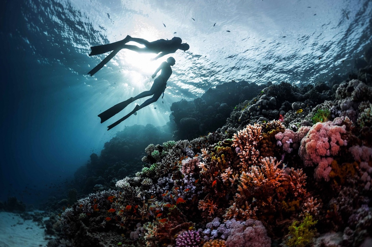 Behaving with marine life. Short memo for beginner freedivers - Freediving UAE