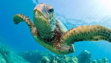 Marine reserves in the UAE - protection of the underwater world and its inhabitants