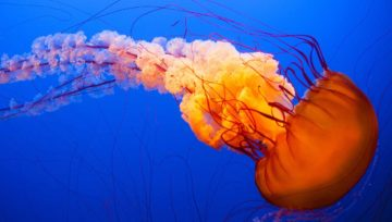 What to do if you are «slapped» by a jellyfish
