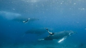 swimming-with-whales-5.jpg.optimal