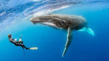 whales_tonga_cover-1024x512