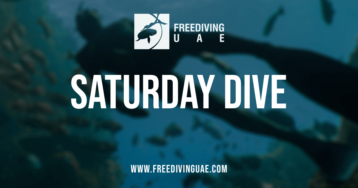 Saturday dive - Freediving in United Arab Emirates. Courses, Certificates and Equipment