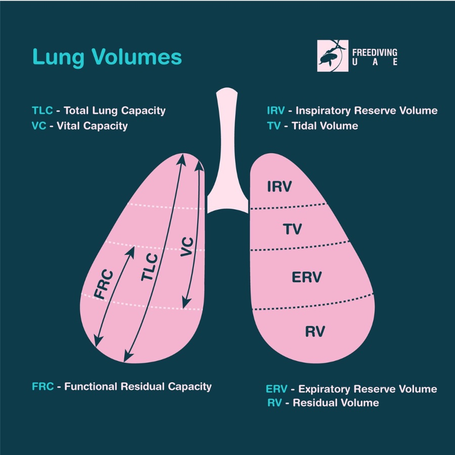 Lungs and their measurements