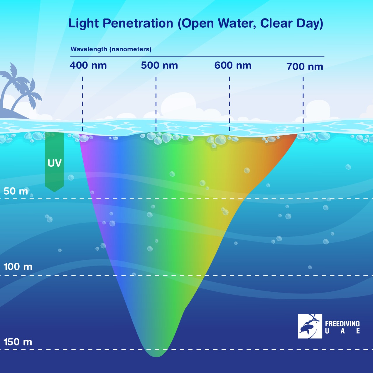 What Happens to Light at Depth? - Freediving in United Arab Emirates. Courses, Certificates and Equipment