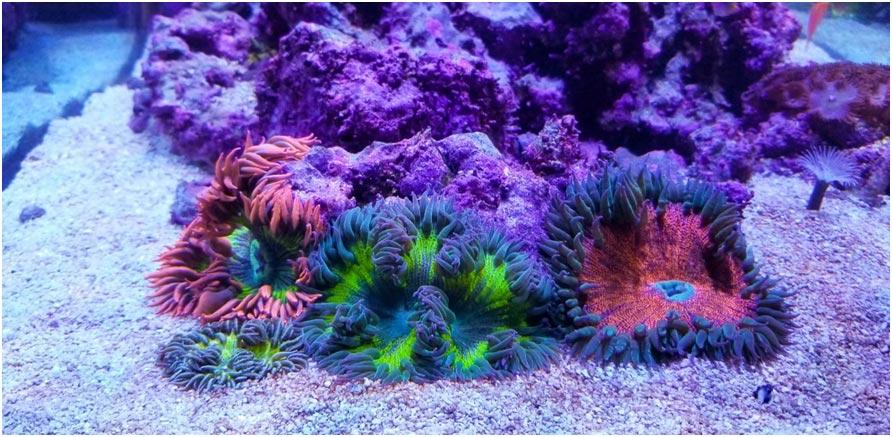 Discover an under-appreciated gem of a reef aquarium. - Freediving in United Arab Emirates. Courses, Certificates and Equipment